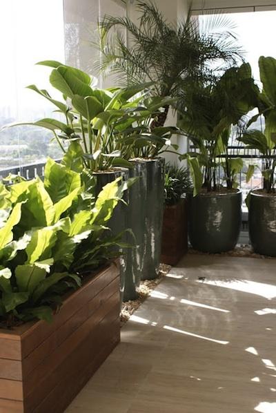 plante exotique pour balcon