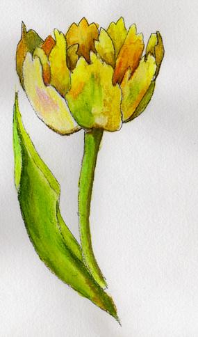 Dessin Dune Tulipe Perroquet à Télécharger Pour Vos Travaux Déco