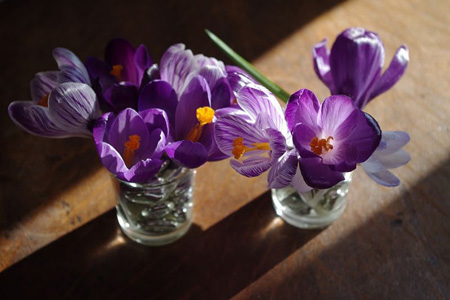 mini bouquets de crocus